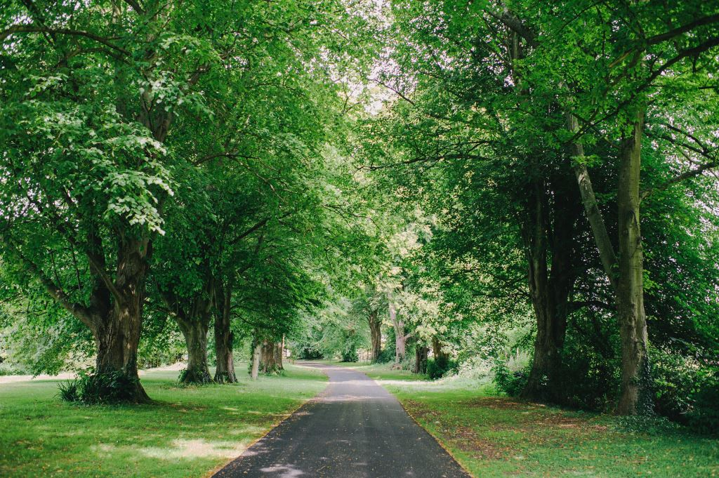 Lime tree lined avenue approaching Saltcote